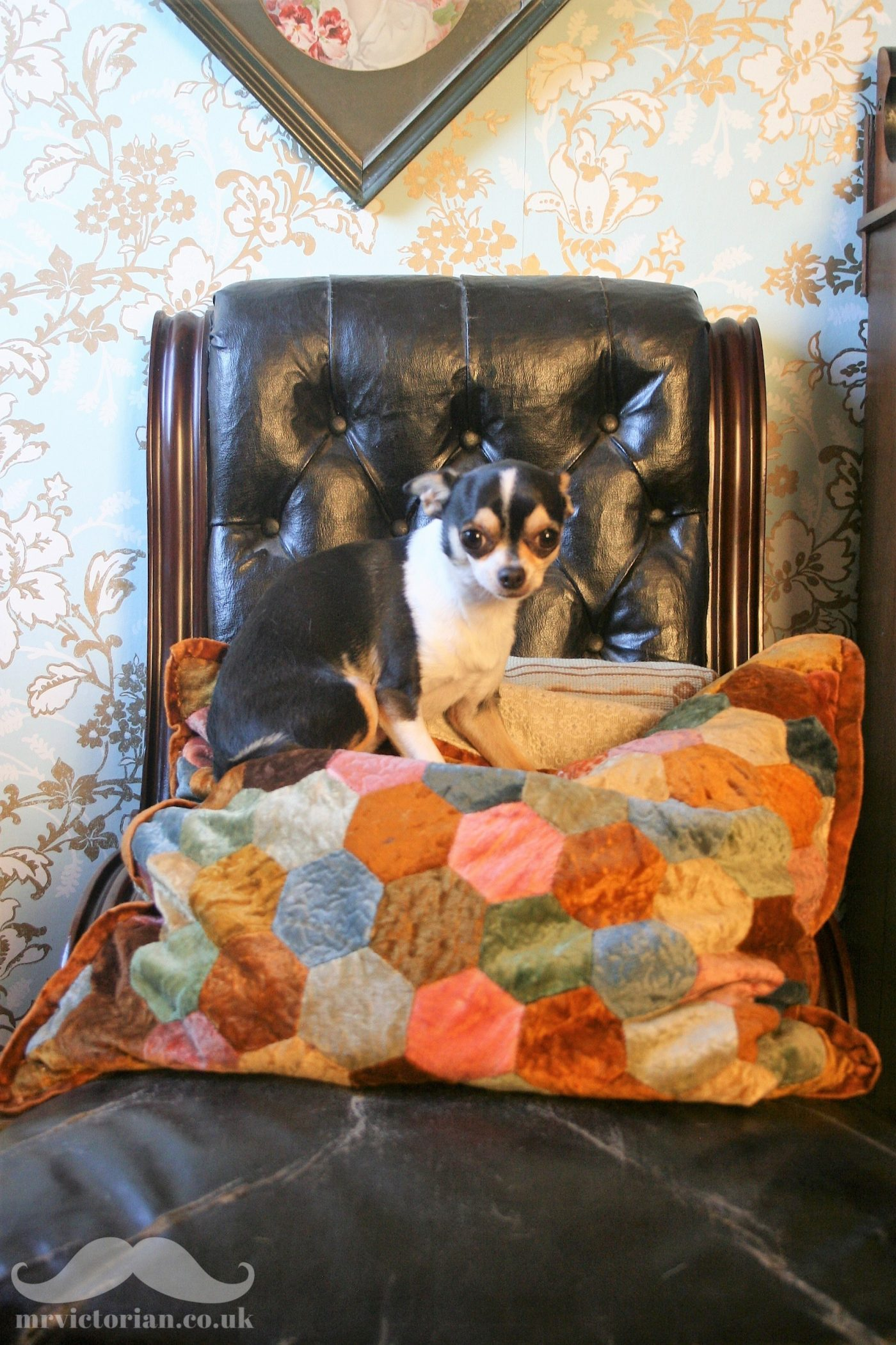 Victorian patchwork cushion vintage chihuahua dog Georgie